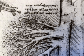 The hepatic blood vessels illustrated by Leonardo Da Vinci