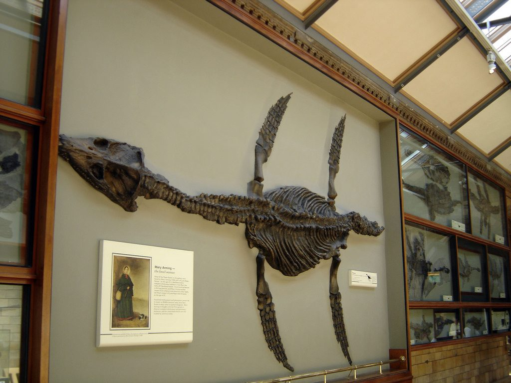 Mary Anning Plesiosaur Natural History Museum London